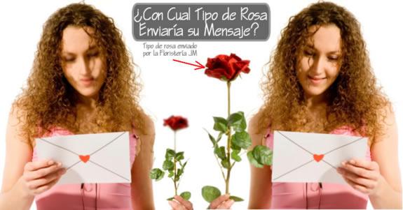 Promocion Rosas Tipo Exportacion Tallo Largo Bogota