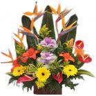 Arreglos Florales Exoticos Bogota a Domicilio