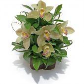 Orquideas Envio Bogota