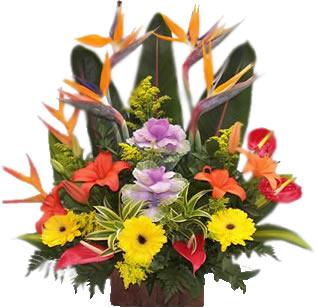 Arreglos Exoticos A Domicilio En Bogota Colombia - Imagenes-de-arreglos-florales