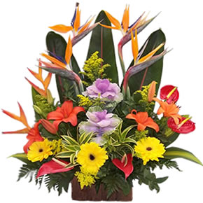 All Flowers Bogota Colombia Delivery