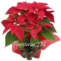 Flores de Navidad en Bogota a Domicilio