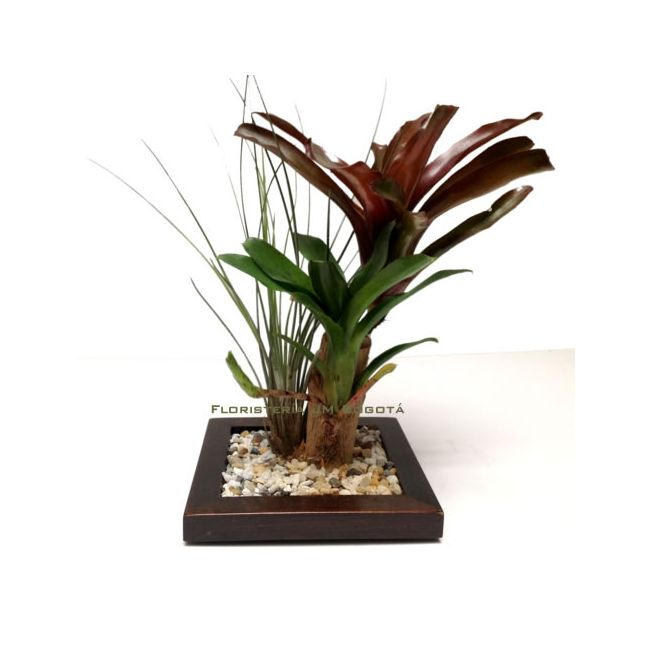Plantas decorativas interior maceta hidroponia planta interior cmxcm kit completo new plantas - Plantas decorativas interior ...