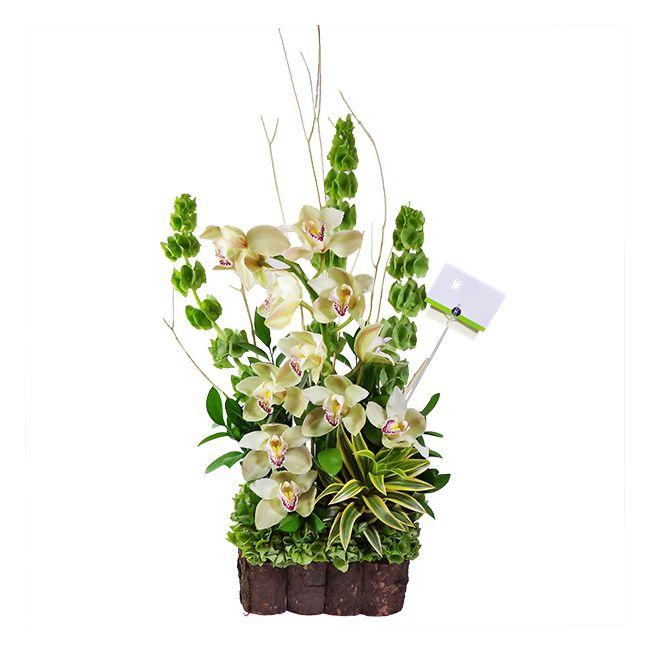 12 Botones De Orquidea Cymbidium Flowers Deluxe
