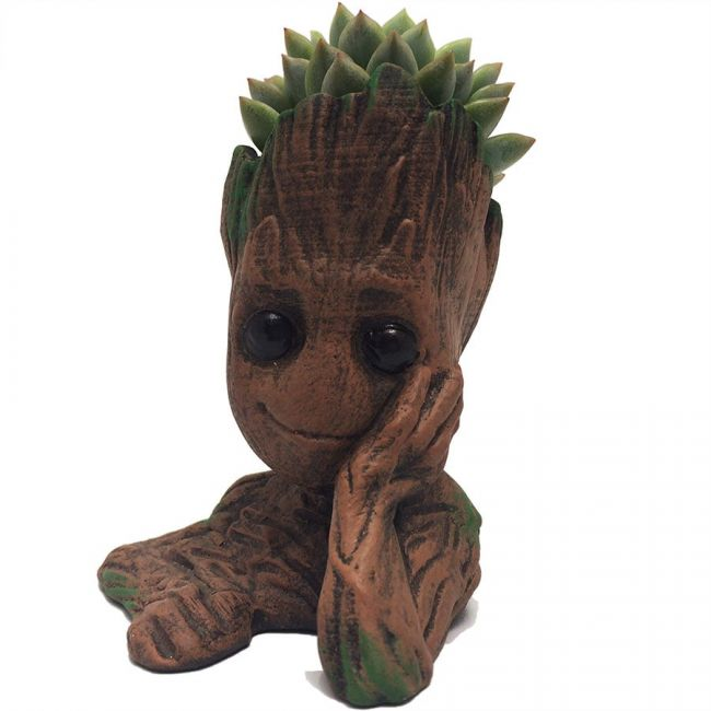 Groot Maceta con Suculenta, vista frontal